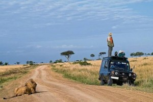A man is standing on the roof of a 4x4. Behind him is a lion which he cannot see.