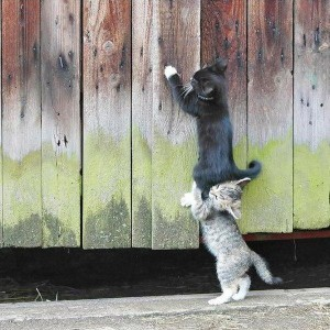 One cat is trying to help another cat climb over a fence.