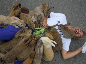 A man is lying on the ground covered with rabbits.