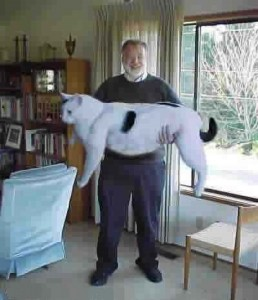 A man holding a very large cat.