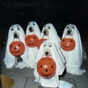 A few dogs each with a pumpkin and dressed to look like ghosts.