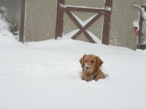 A dog is sitting up to its neck in snow.