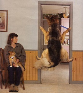 A dog is being dragged into see the vet. His legs are on the door frame to stop himself from him being dragged.