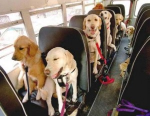 Seven dogs sitting in a bus.