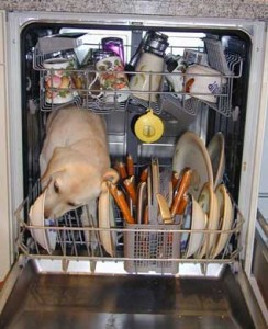 A dog is inside a dishwasher licking the dirty dishes. He hasn't finished yet.