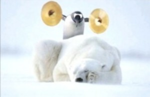 A penguin is standing on a sleeping polar. He is going to bang a pair of cymbals.
