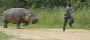 A man is running away from a hippo so he obviously is not thinking about using third person singular at this moment.